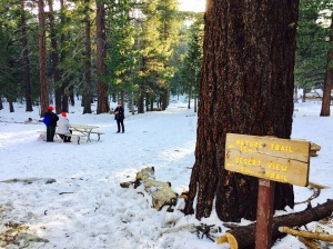 From Desert floor to snowy forest - Photo by Jill Weinlein